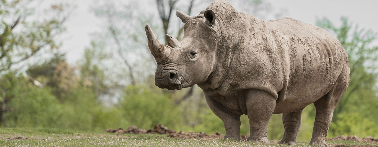 5 Types of Entrepreneurs -rhino
